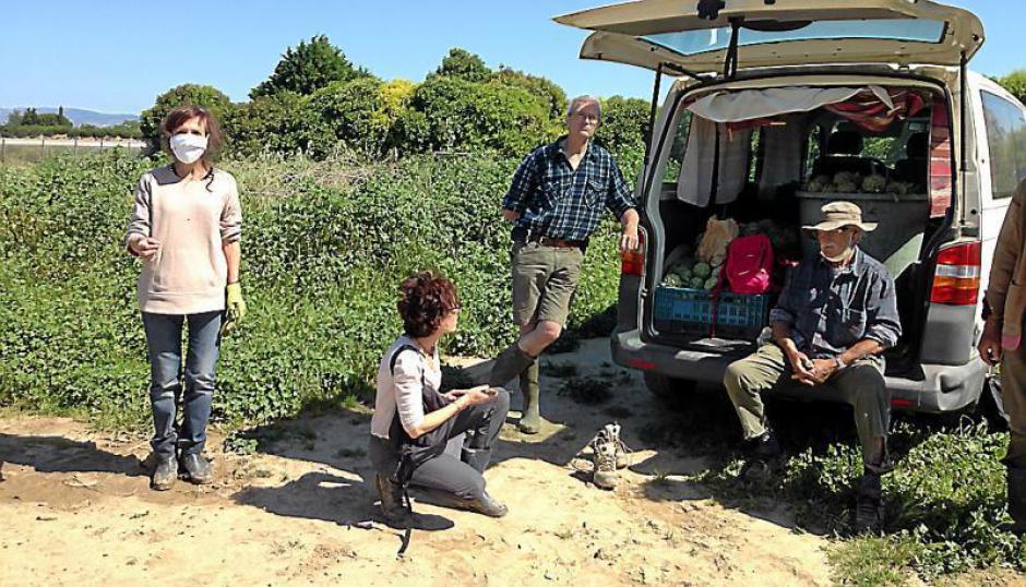 Saint-Hippolyte. Le Secours populaire se mobilise pour une cueillette d'artichauts