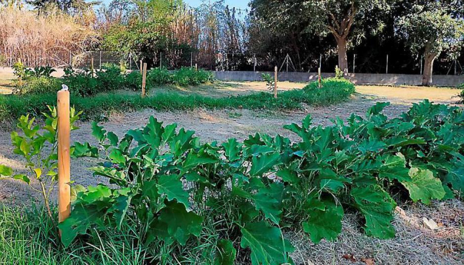 Espace comestible. Légumes à planter et à partager (L'Indep)