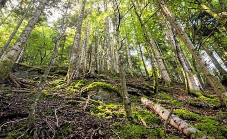 Pyrénées-Orientales. Les communes forestières rejettent le budget de l'ONF