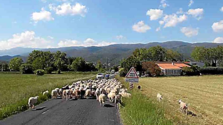 Prades. « La terre, c'est nos oignons » pour préserver les terres agricoles